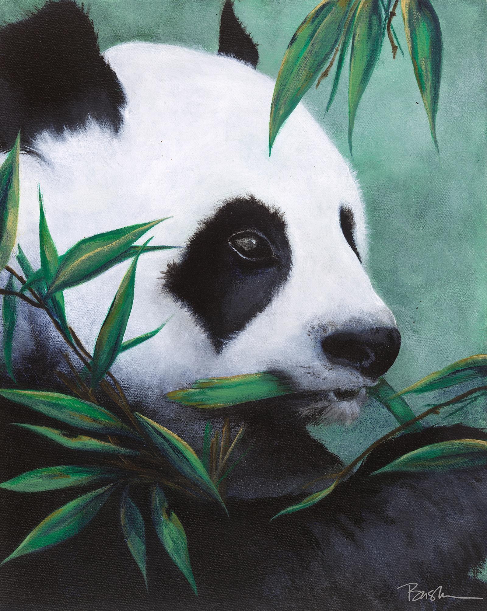 panda-laura-basha